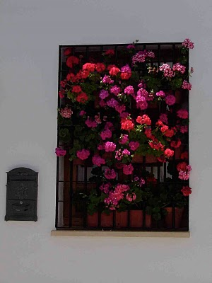 cordoba window